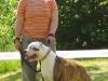 eabc-dogger