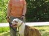eabc-dogger1